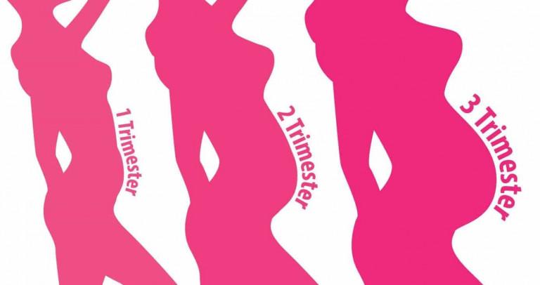 illustration-breast-changes-during-pregnancy-trimester | American Pregnancy Association