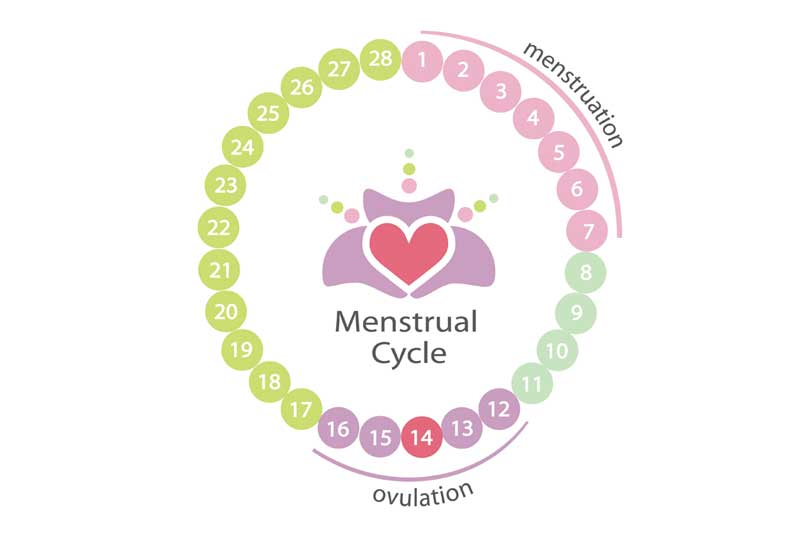 Graphic of a circle of the menstruation period