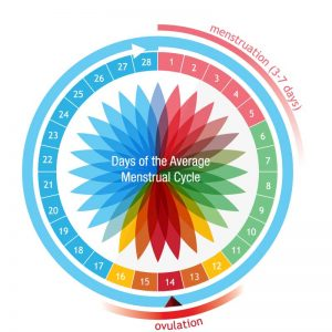 understanding-ovulations-Illustration-Circular-Ovulation-Cycle | American Pregnancy Association