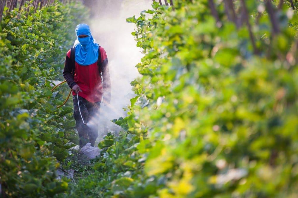 pesticides-and-pregnancy | American Pregnancy Association