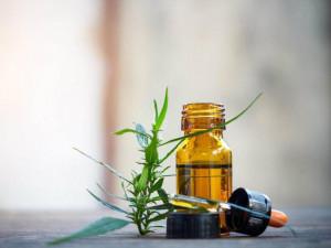 CBD oil during pregnancy | American Pregnancy Association
